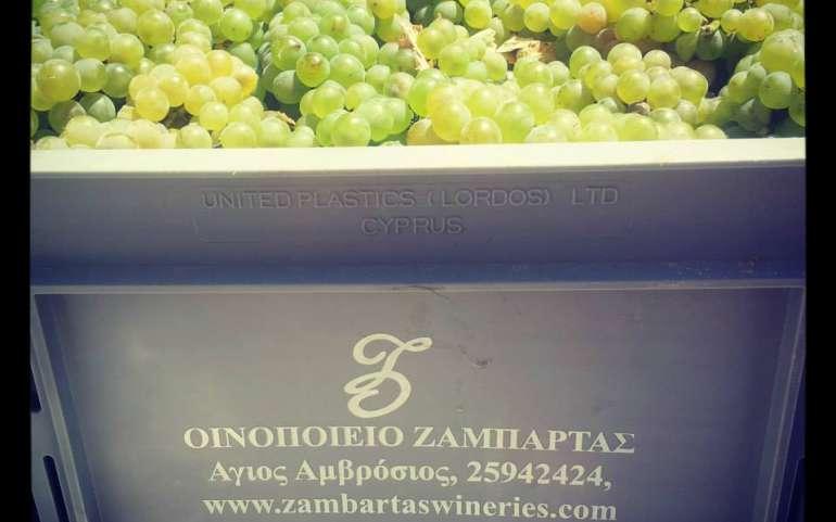 Vintage Zambartas harvest