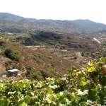 cyprus wine region