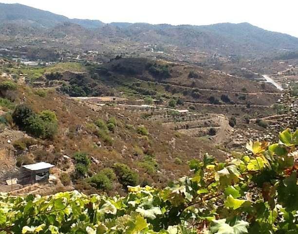 My high altitude grape playground
