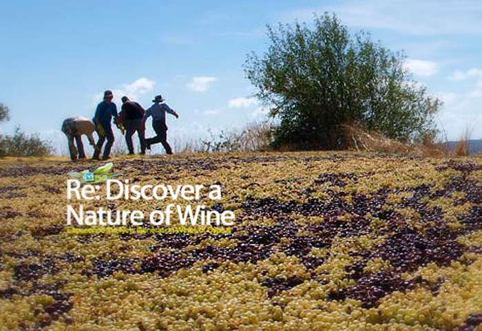 In touch with Cyprus original vitiviniculture