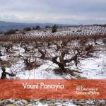 snow capped vineyards