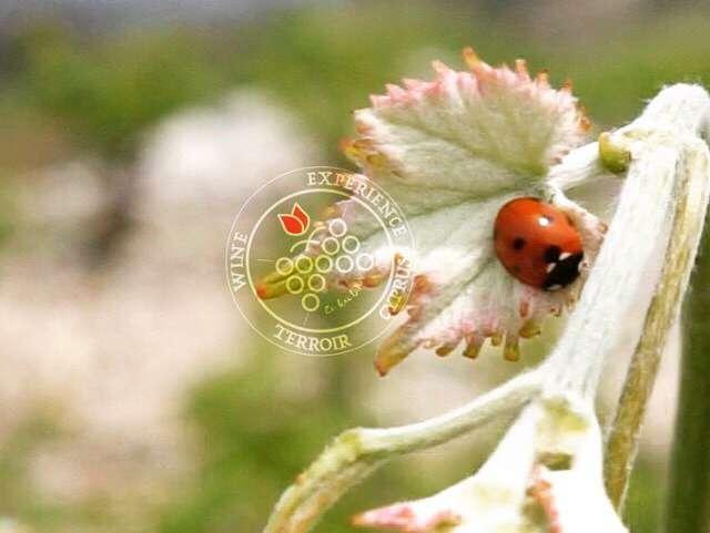 Ungrafted biodiversity