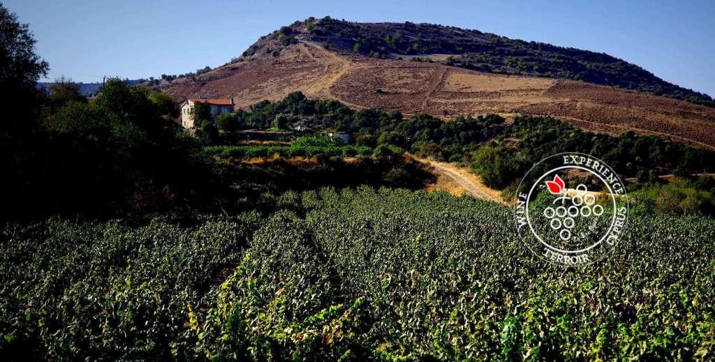 Cyprus wine territory - terroir experience